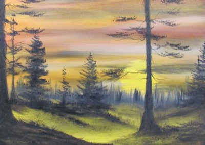 Evergreens at Sunset